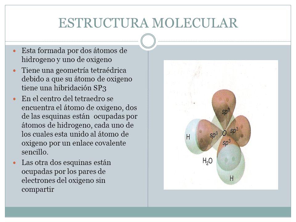 ESTRUCTURA MOLECULAR Esta formada por dos átomos de hidrogeno y uno de oxigeno.