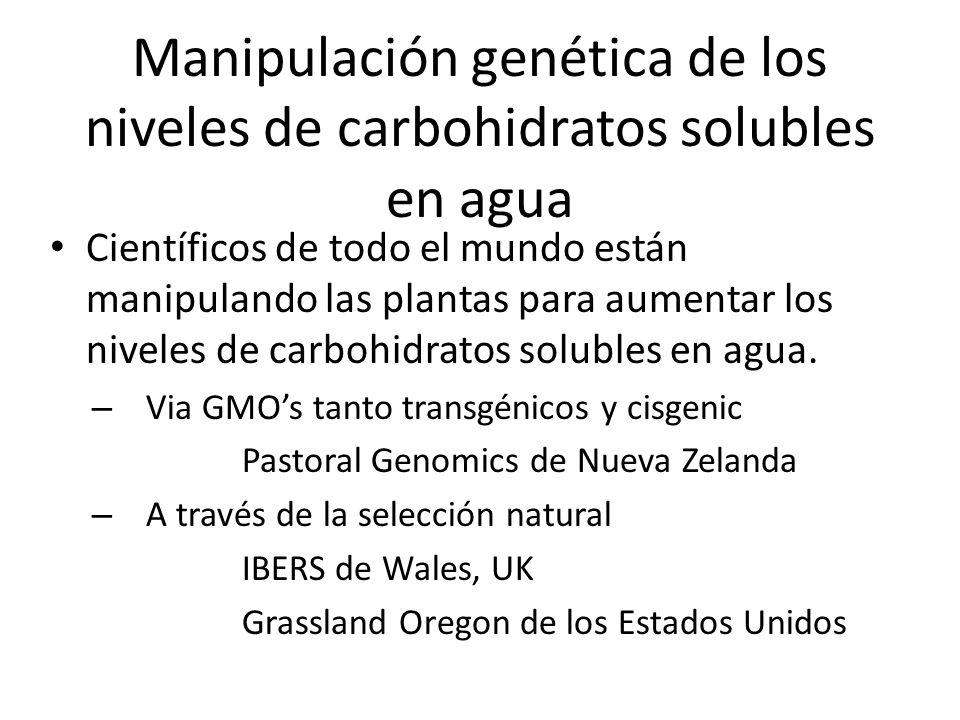 Manipulación genética de los niveles de carbohidratos solubles en agua