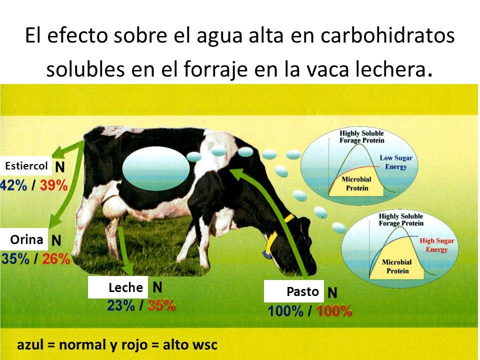 El efecto sobre el agua alta en carbohidratos solubles en el forraje en la vaca lechera.
