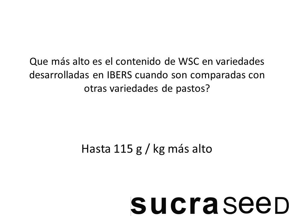 Que más alto es el contenido de WSC en variedades desarrolladas en IBERS cuando son comparadas con otras variedades de pastos