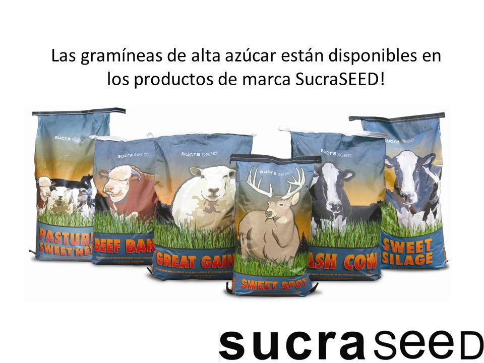 Las gramíneas de alta azúcar están disponibles en los productos de marca SucraSEED!