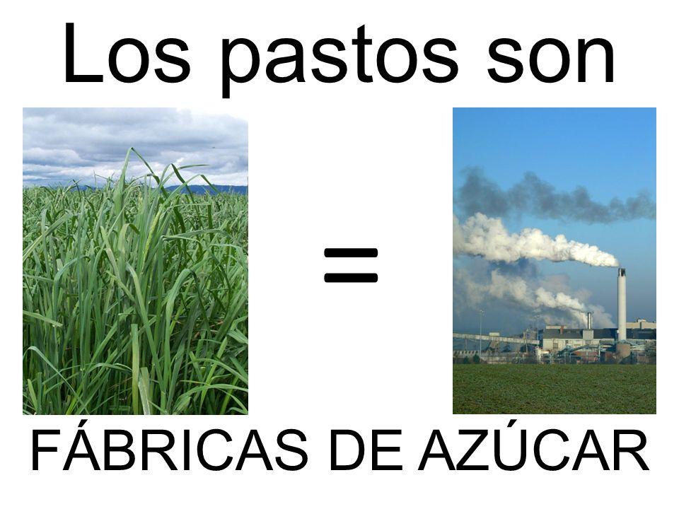 = Los pastos son FÁBRICAS DE AZÚCAR
