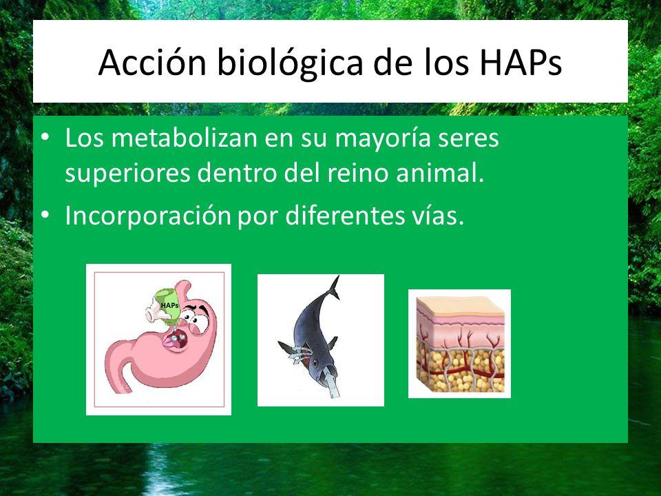 Acción biológica de los HAPs