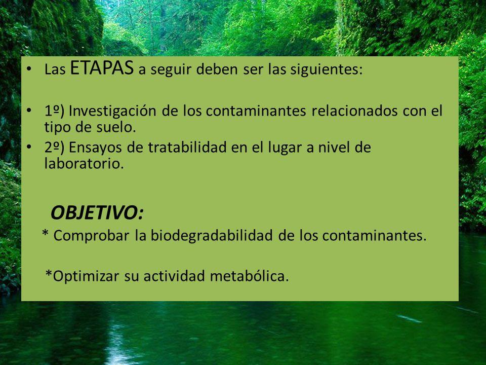 OBJETIVO: Las ETAPAS a seguir deben ser las siguientes: