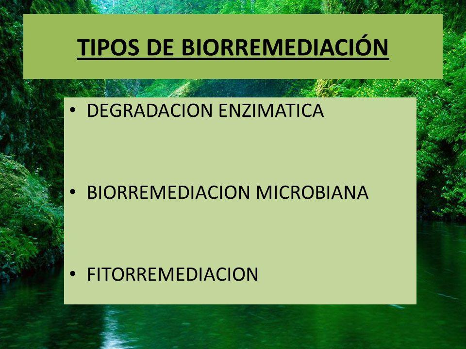 TIPOS DE BIORREMEDIACIÓN