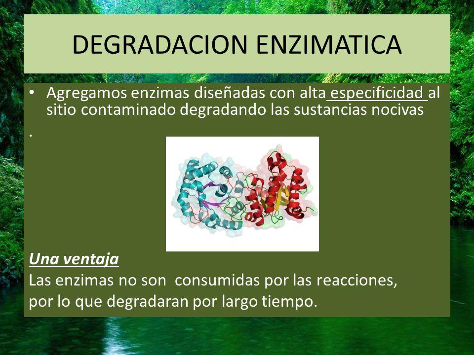 DEGRADACION ENZIMATICA
