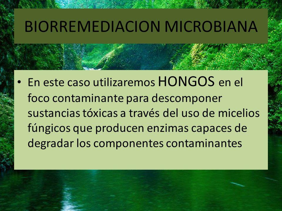 BIORREMEDIACION MICROBIANA