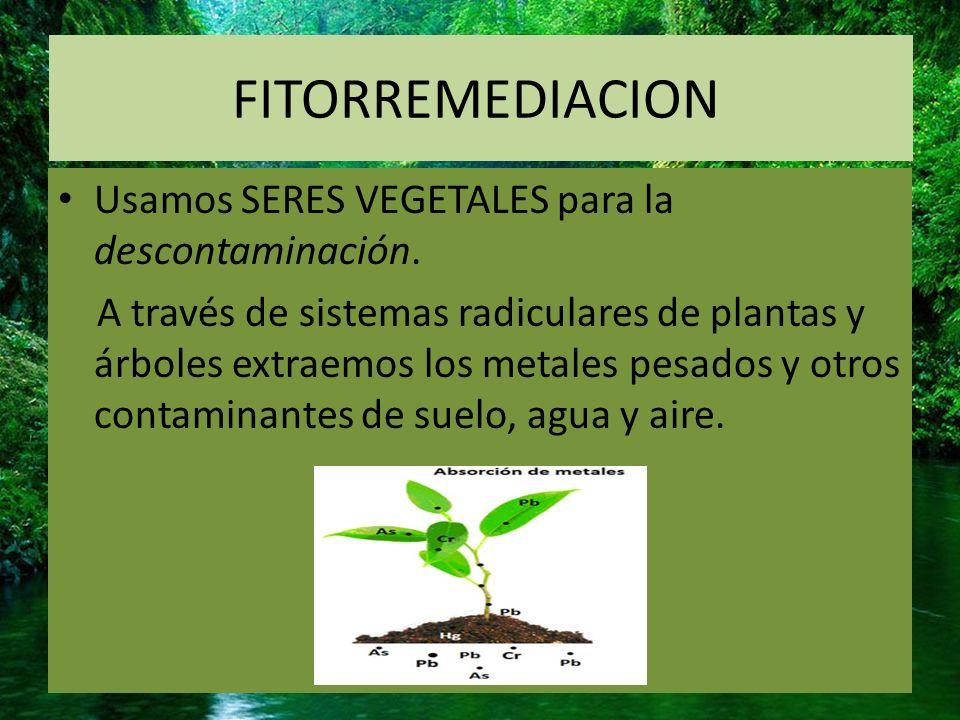 FITORREMEDIACION Usamos SERES VEGETALES para la descontaminación.