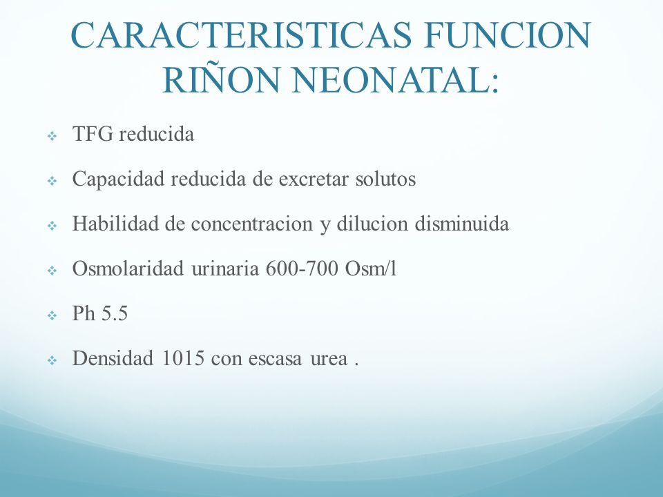 CARACTERISTICAS FUNCION RIÑON NEONATAL: