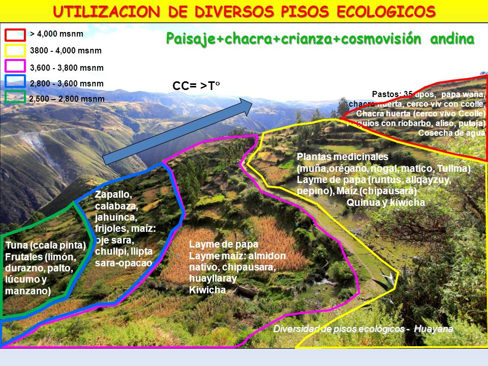 UTILIZACION DE DIVERSOS PISOS ECOLOGICOS
