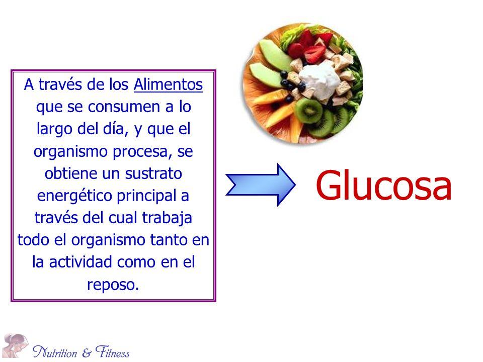 A través de los Alimentos que se consumen a lo largo del día, y que el organismo procesa, se obtiene un sustrato energético principal a través del cual trabaja todo el organismo tanto en la actividad como en el reposo.