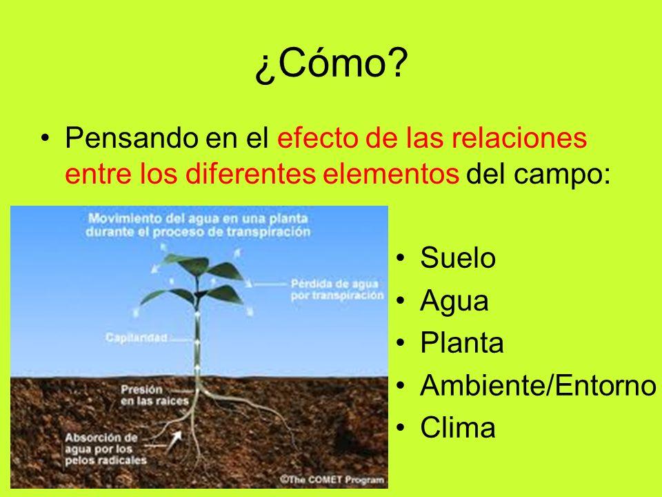 ¿Cómo Pensando en el efecto de las relaciones entre los diferentes elementos del campo: Suelo. Agua.