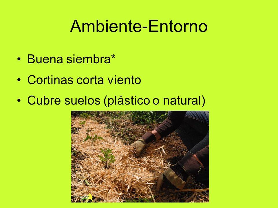 Ambiente-Entorno Buena siembra* Cortinas corta viento