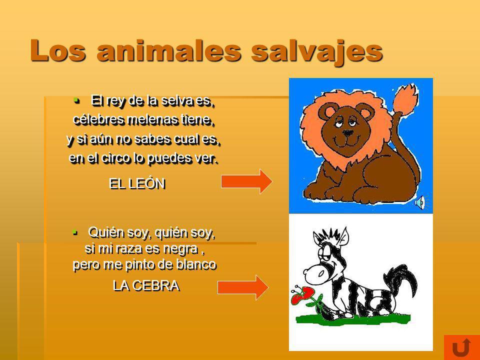 Los animales salvajes El rey de la selva es, célebres melenas tiene,