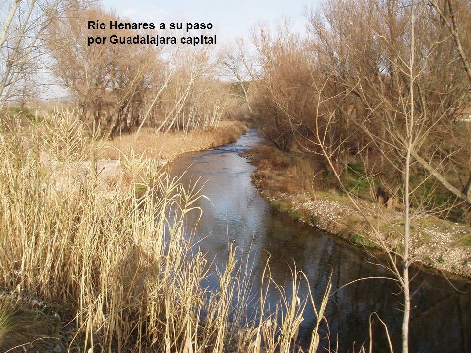 Río Henares a su paso por Guadalajara capital