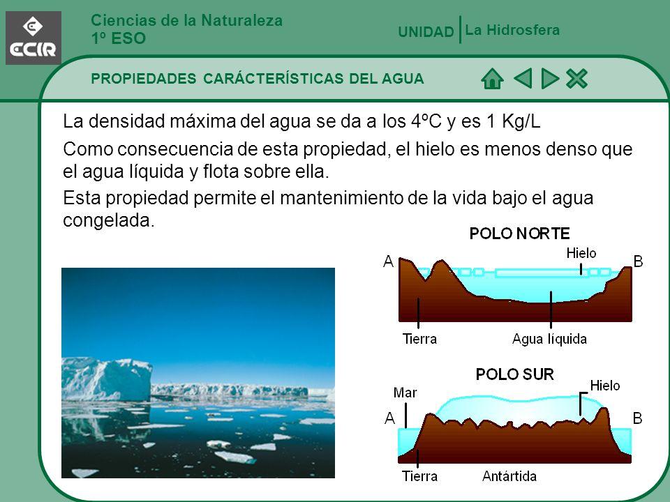 La densidad máxima del agua se da a los 4ºC y es 1 Kg/L
