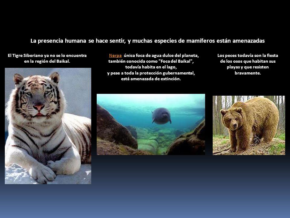 La presencia humana se hace sentir, y muchas especies de mamíferos están amenazadas