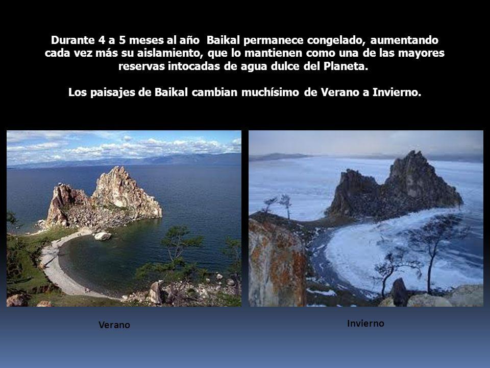 Los paisajes de Baikal cambian muchísimo de Verano a Invierno.