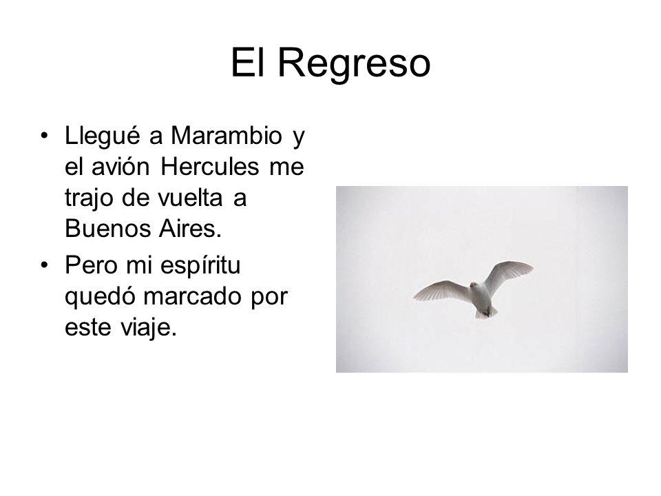 El Regreso Llegué a Marambio y el avión Hercules me trajo de vuelta a Buenos Aires.