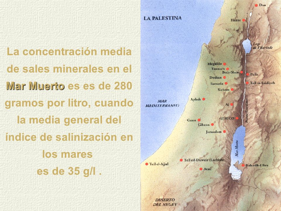 La concentración media de sales minerales en el Mar Muerto es es de 280 gramos por litro, cuando la media general del índice de salinización en los mares