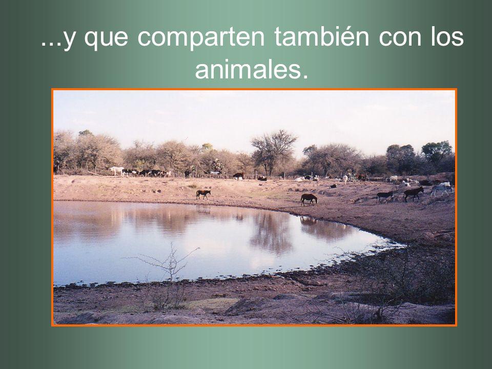 ...y que comparten también con los animales.