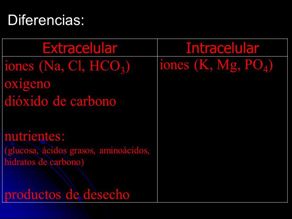 Diferencias: Extracelular Intracelular iones (Na, Cl, HCO3) oxígeno