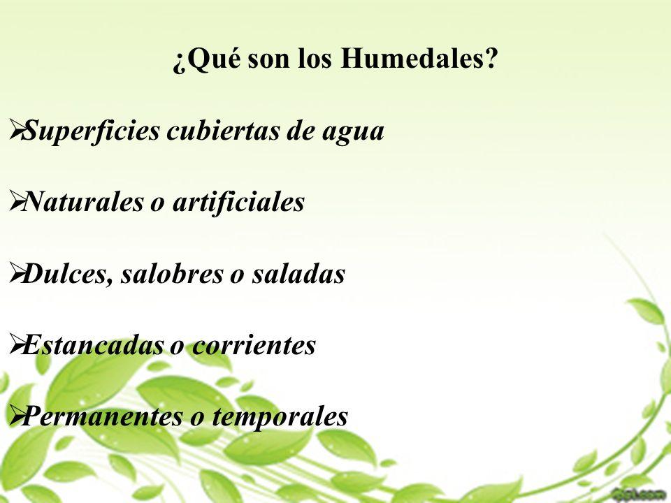 ¿Qué son los Humedales Superficies cubiertas de agua. Naturales o artificiales. Dulces, salobres o saladas.