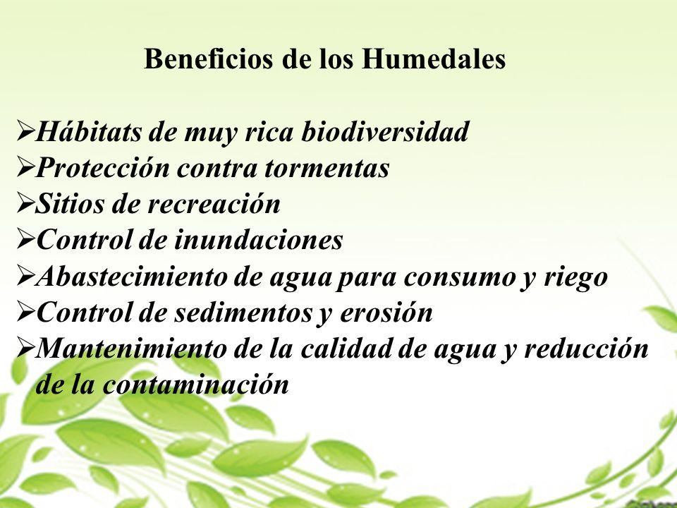 Beneficios de los Humedales