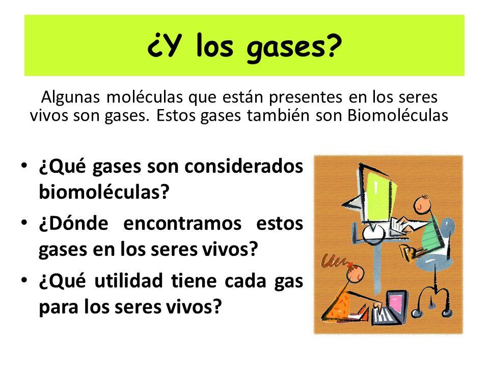 ¿Y los gases ¿Qué gases son considerados biomoléculas