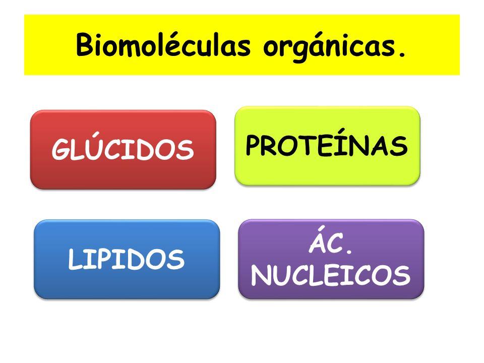 Biomoléculas orgánicas.