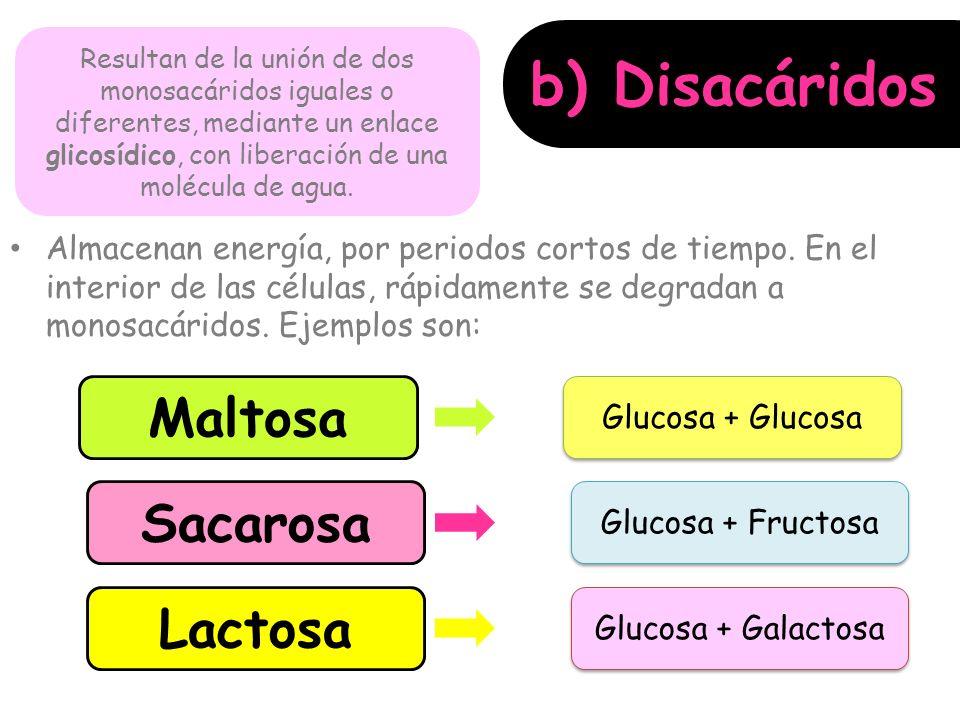 b) Disacáridos Maltosa Sacarosa Lactosa