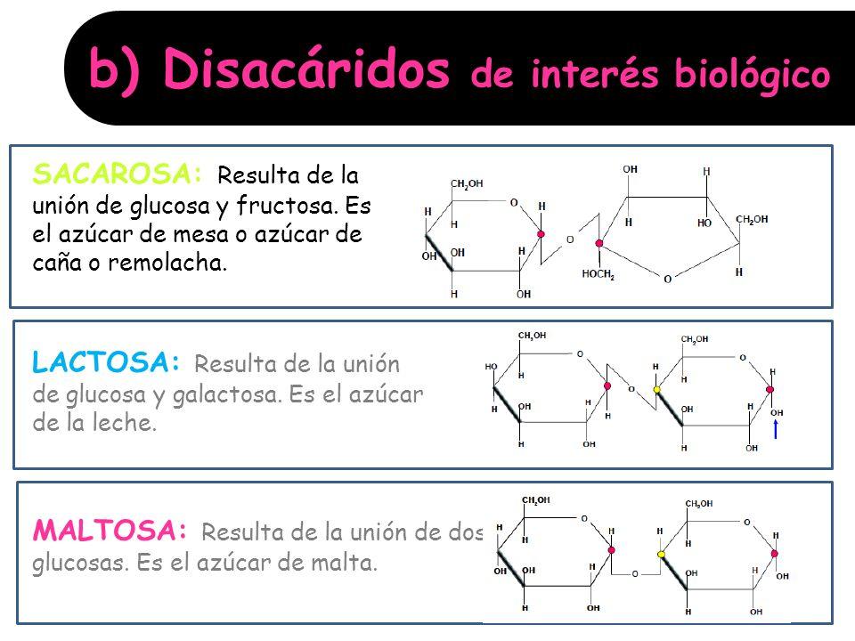 b) Disacáridos de interés biológico: