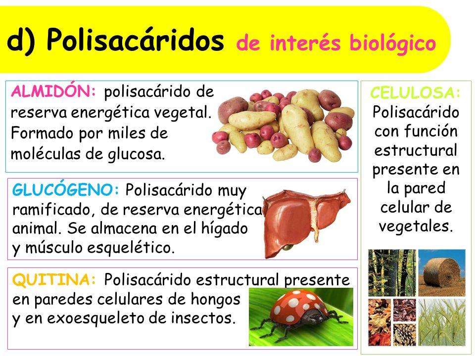 d) Polisacáridos de interés biológico