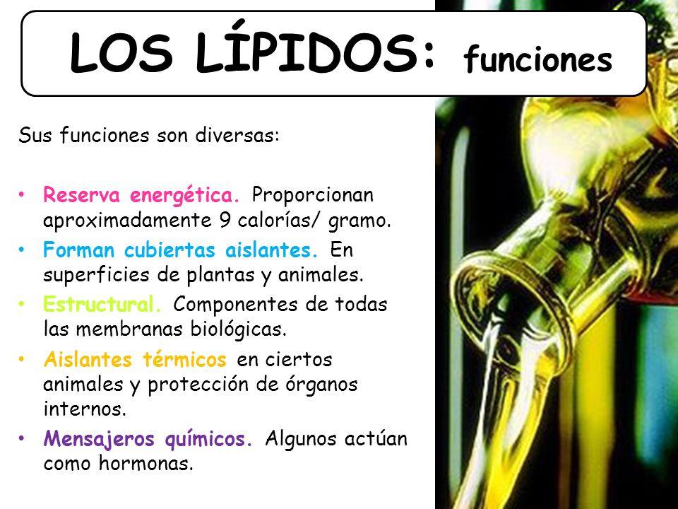 LOS LÍPIDOS: funciones