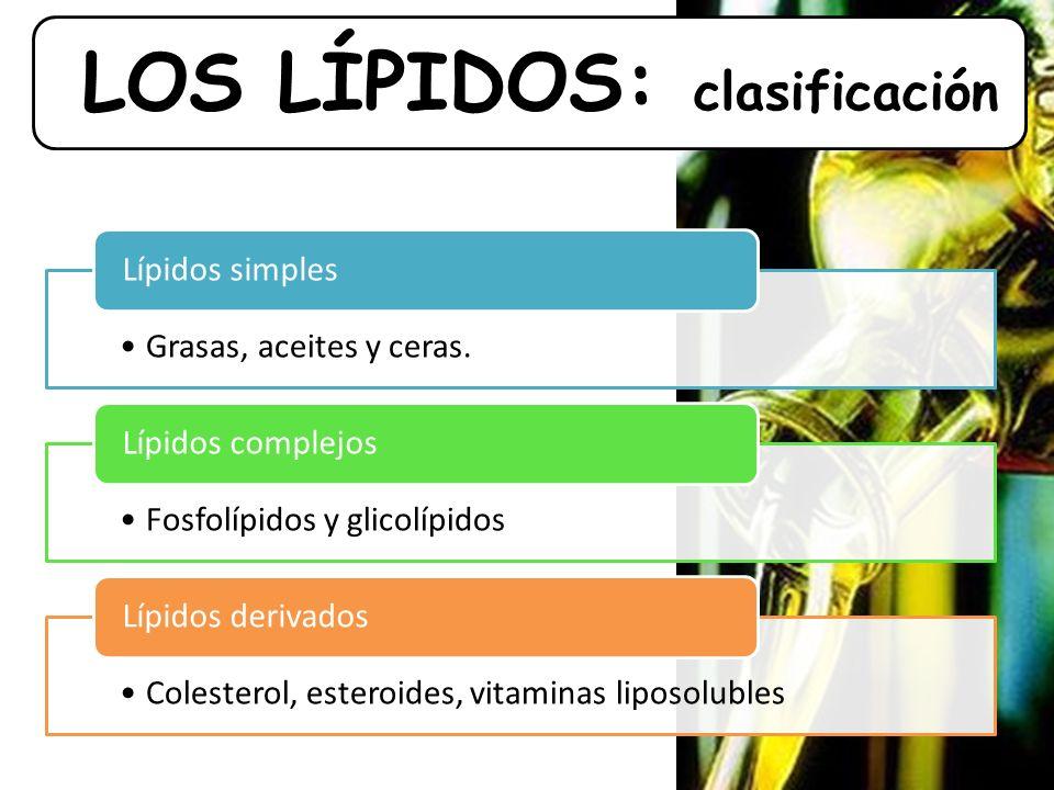 LOS LÍPIDOS: clasificación