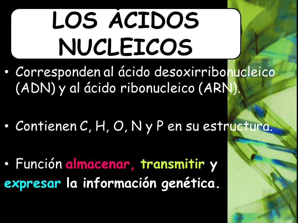 LOS ÁCIDOS NUCLEICOS Corresponden al ácido desoxirribonucleico (ADN) y al ácido ribonucleico (ARN).