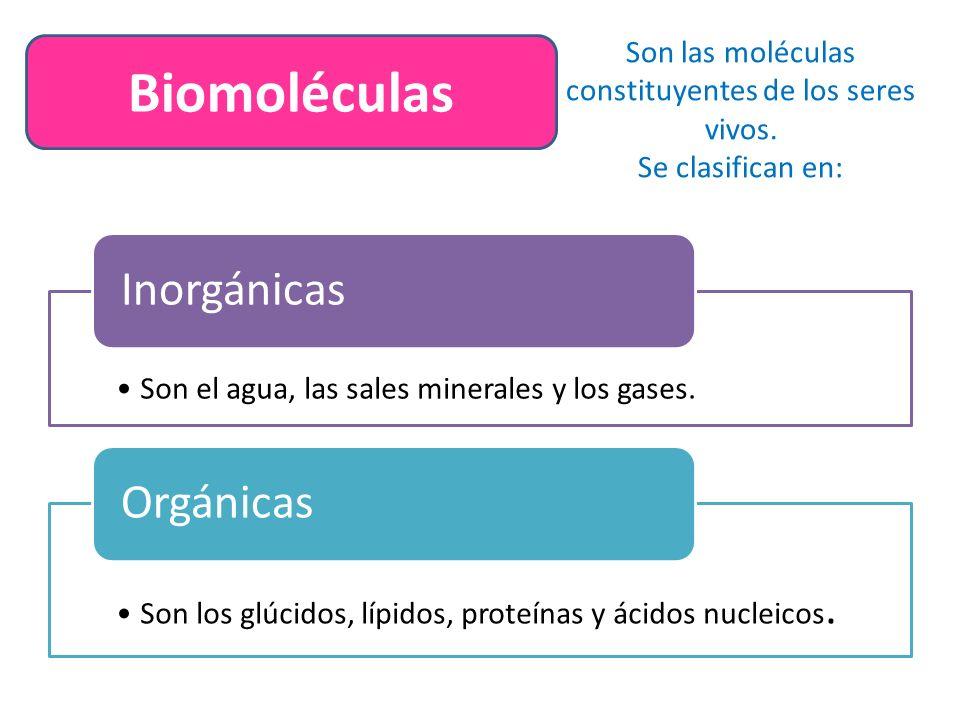 Son las moléculas constituyentes de los seres vivos.