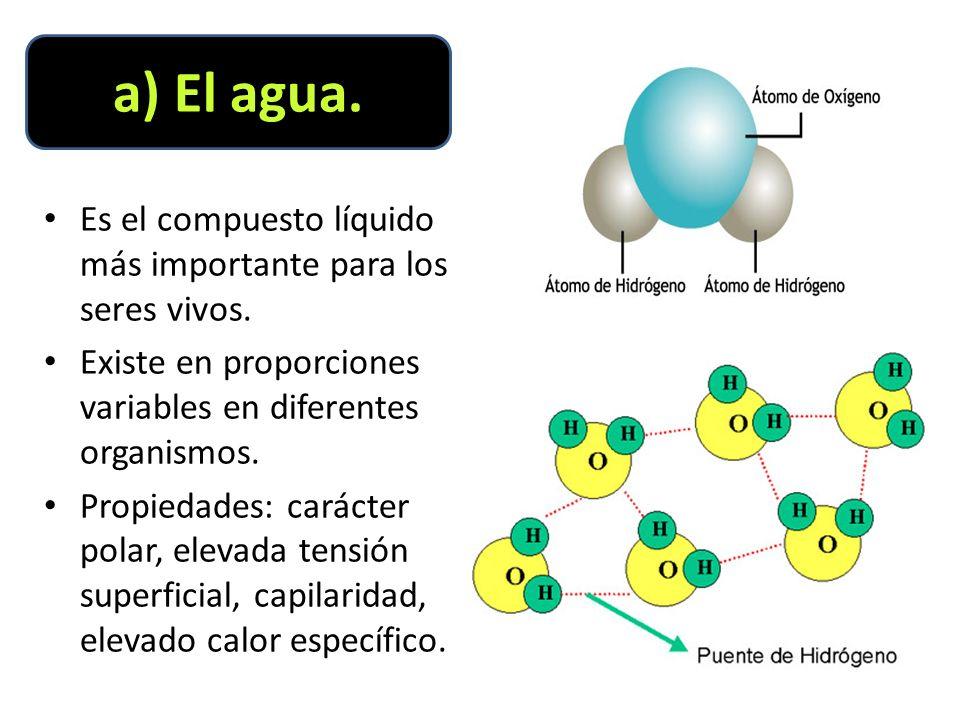 a) El agua. Es el compuesto líquido más importante para los seres vivos. Existe en proporciones variables en diferentes organismos.