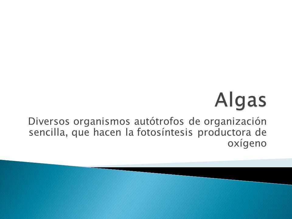 Algas Diversos organismos autótrofos de organización sencilla, que hacen la fotosíntesis productora de oxígeno.