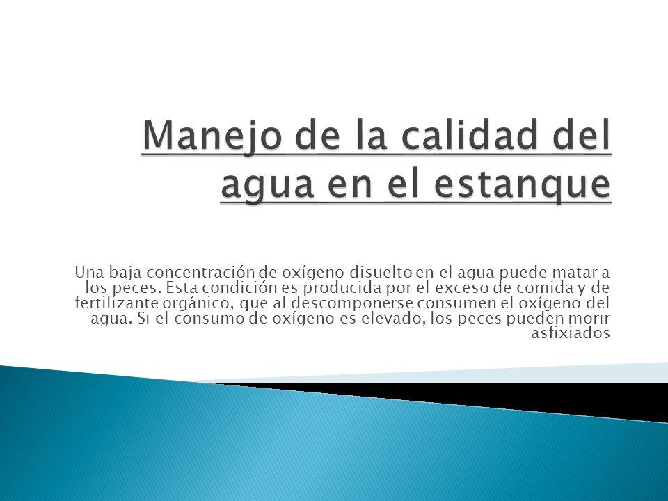 Piscicultura ppt descargar for Estanque oxigeno