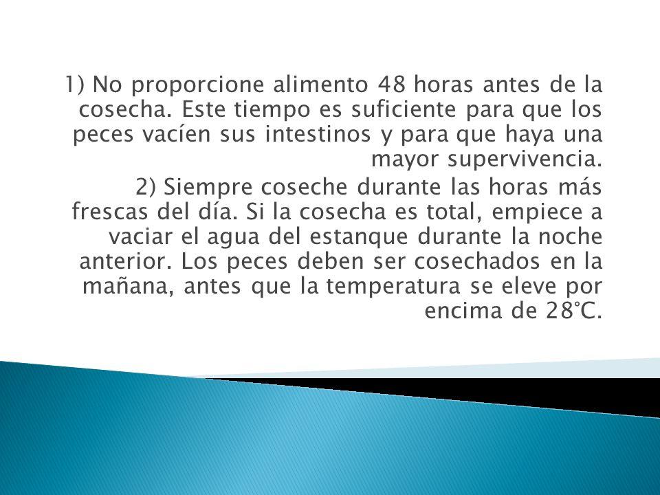 1) No proporcione alimento 48 horas antes de la cosecha