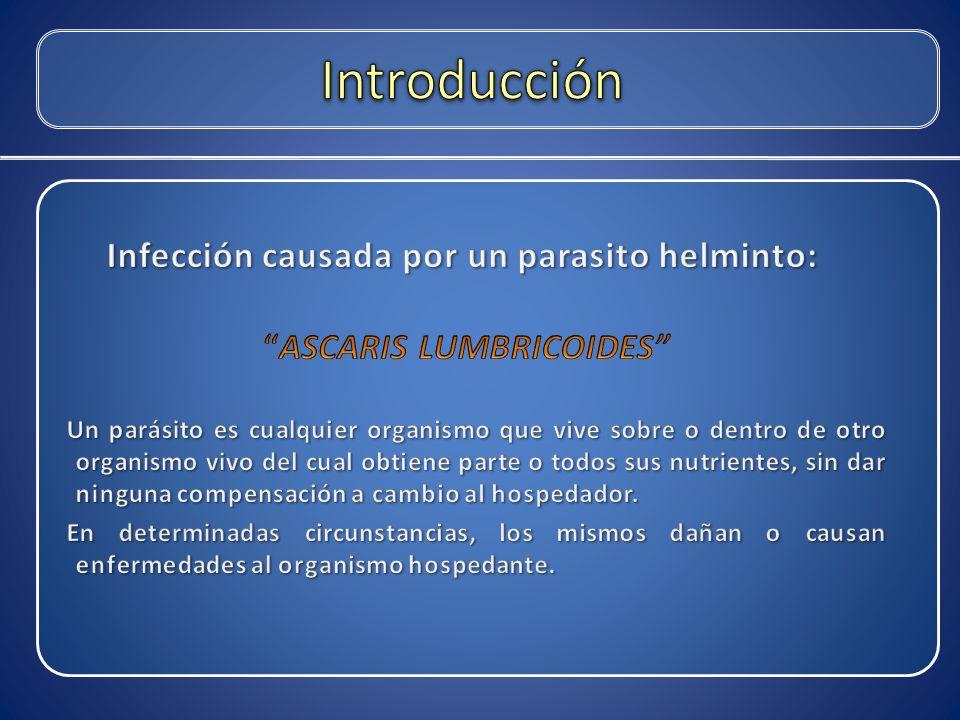 Infección causada por un parasito helminto: ASCARIS LUMBRICOIDES