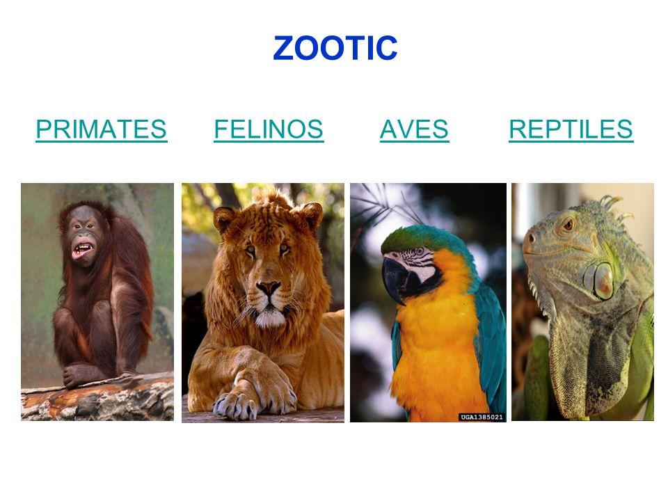 ZOOTIC PRIMATES FELINOS AVES REPTILES