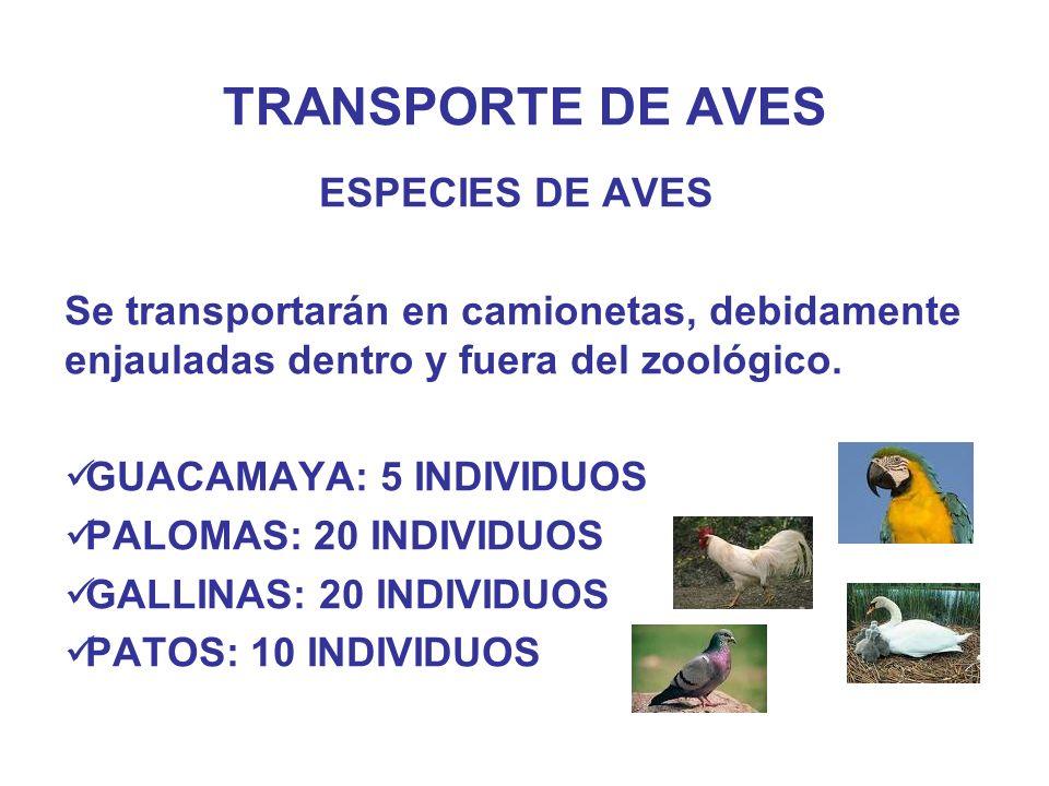 TRANSPORTE DE AVES ESPECIES DE AVES