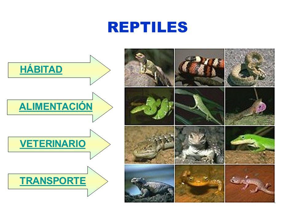 REPTILES HÁBITAD ALIMENTACIÓN VETERINARIO TRANSPORTE
