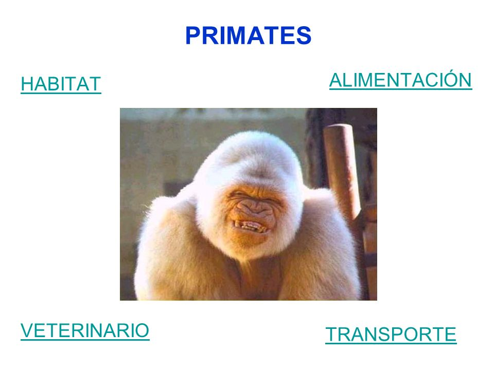 PRIMATES ALIMENTACIÓN HABITAT VETERINARIO TRANSPORTE