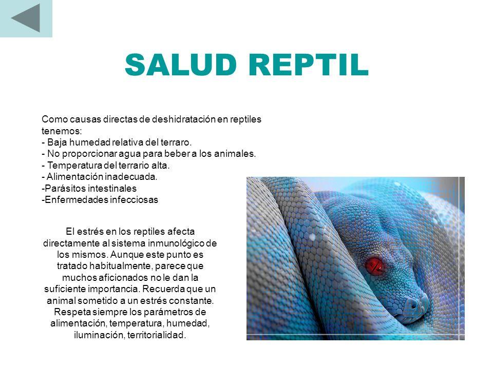SALUD REPTIL Como causas directas de deshidratación en reptiles tenemos: - Baja humedad relativa del terraro.