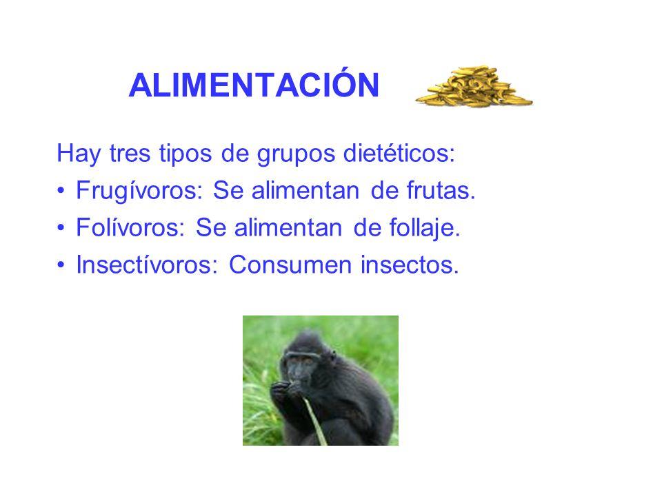 ALIMENTACIÓN Hay tres tipos de grupos dietéticos:
