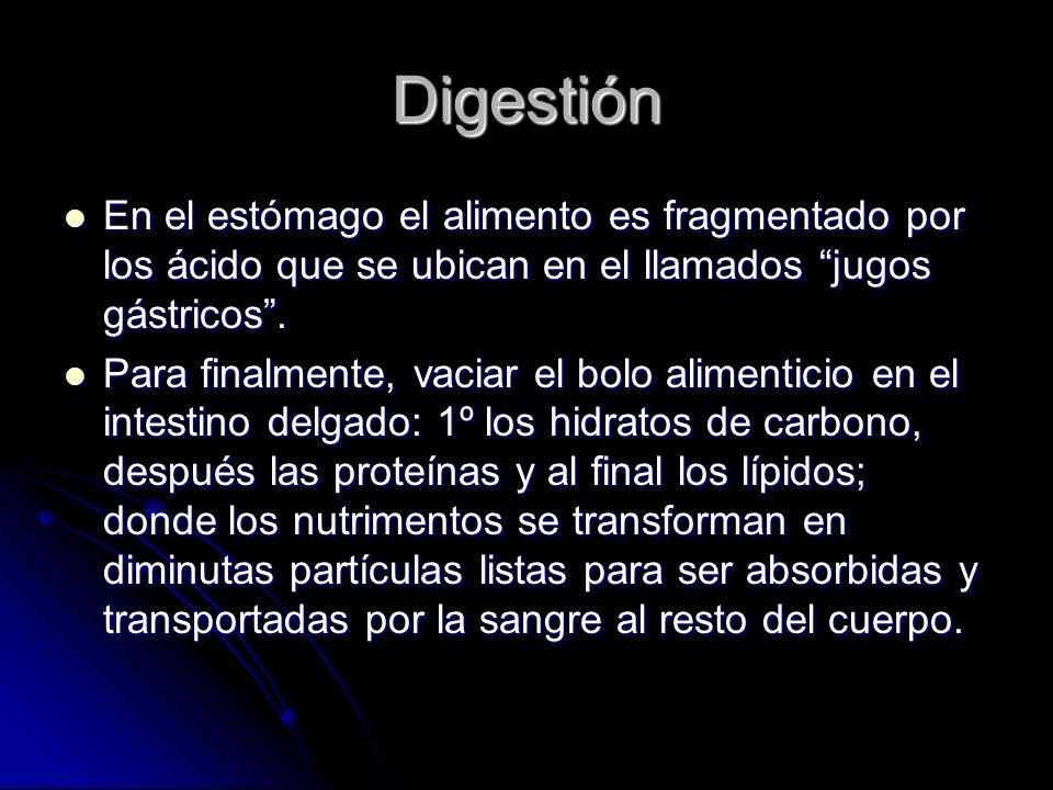 Digestión En el estómago el alimento es fragmentado por los ácido que se ubican en el llamados jugos gástricos .