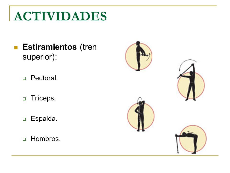 ACTIVIDADES Estiramientos (tren superior): Pectoral. Tríceps. Espalda.